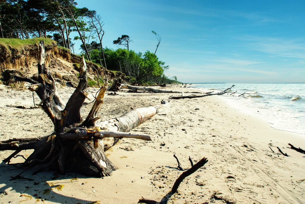 nationalpark, ostsee, strand, windflüchter, darß, darss, baum